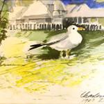 Charlevoix Gull